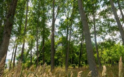 Naturaleza y  Salud: Fitoncidas